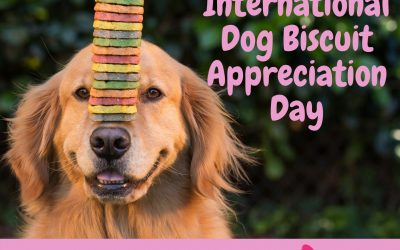 International Dog Biscuit Appreciation Day – 23 February 2021