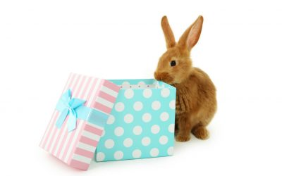 Bunnies as gifts during Easter