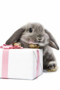 Bunny rabbit present